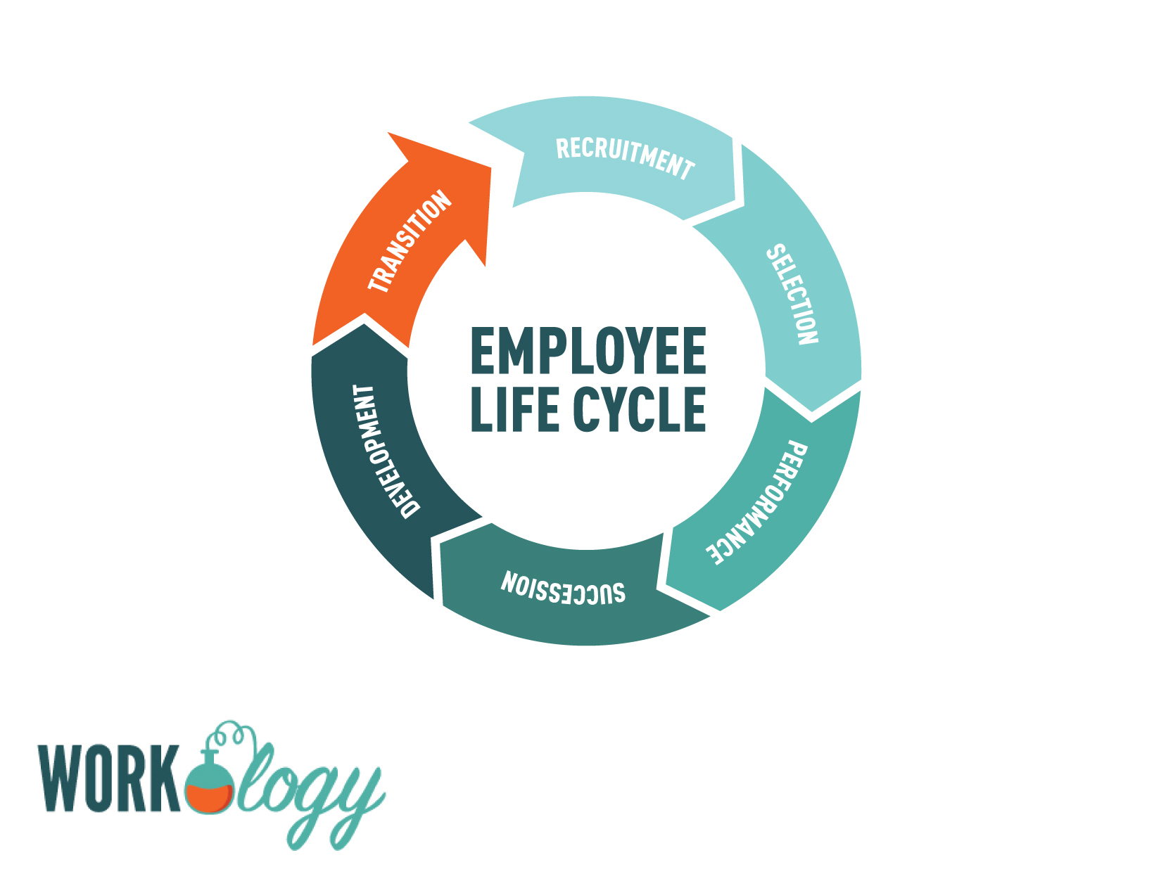 hr life cycle process The employee life cycle is a human resources tool meant to identify stages in the career of the employee in order to adjust their management and optimize the resources at a given time  hr should be instructed about the interview process, with a clear description of the intended role and responsibility.