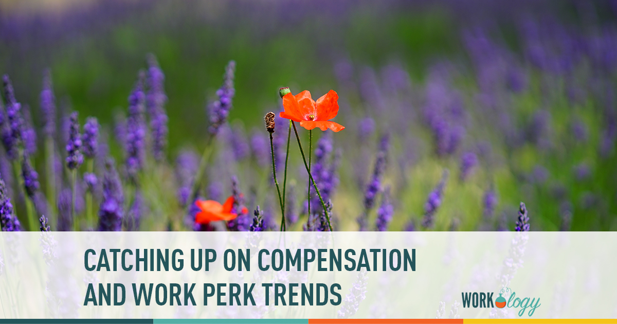 catching up on compensation and work perk trends